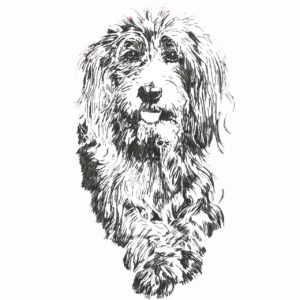 Pet illustration in black and white